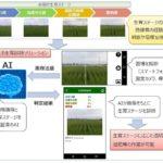 AIがイネの生育診断をするサービス、NTTデータが開始へ