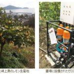 ICTとAI技術をレモン栽培に活用、広島県で栽培試験を開始